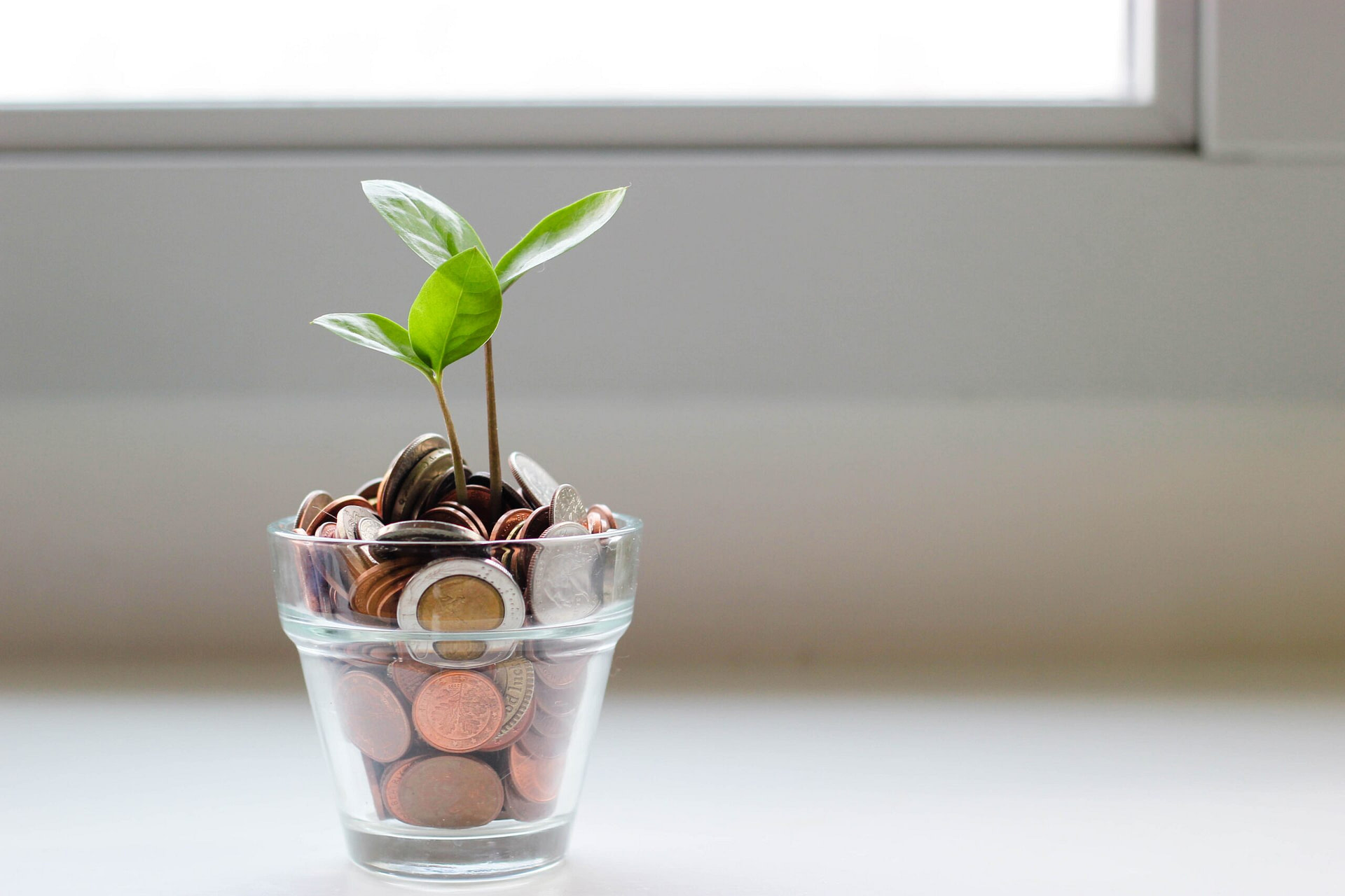 green plant growing from glass pot of coins